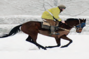 Wot No British 'Horse Of The Year'?