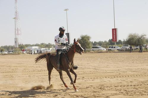 Emirati Irish and South African winners in first week of Sheikh Mohammed Endurance Cup at DIEC