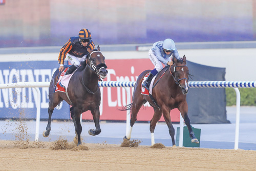 Sporting Chance has at least that - Meydan Preview (Thursday)