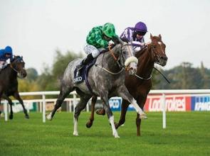 Gatsby Champion in Ireland and heading to Meydan