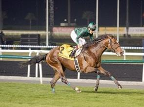 Meydan Japanese star knows Just the Way