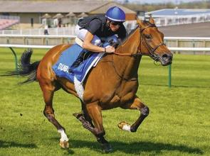No Illusion; filly has Wild ability